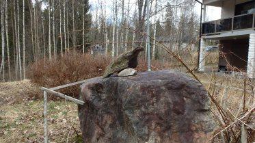 Lintu kivellä