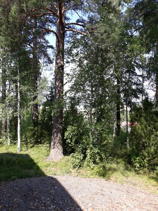 Koisjärven koulun takapihaa