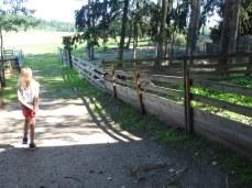 Hennolan kotieläintila